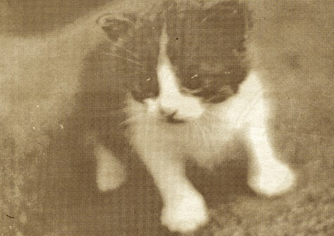 """FROM THE ARCHIVES: Vol. XXIX, No. 6 (May 1999) – """"Tiny tiny kitties invade Prep"""""""