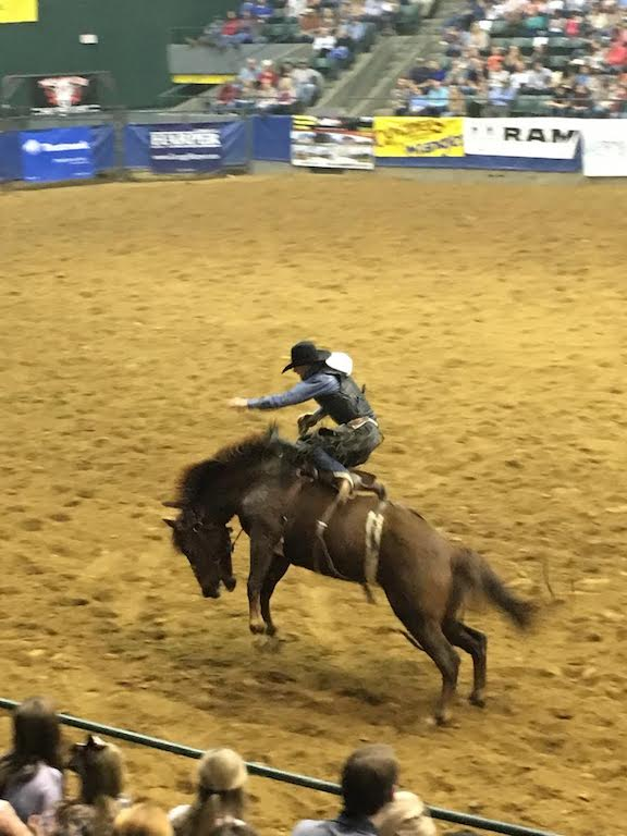 One bronc rider strives to achieve a top score on the back of a bucking horse. Photo by Mary Patton Murphy.