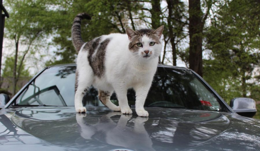 Whether on a car or not on a car, there's only one Henry Sites, and it's this one. Well, there are probably more Henry Sites in the world, but this one is a cat.