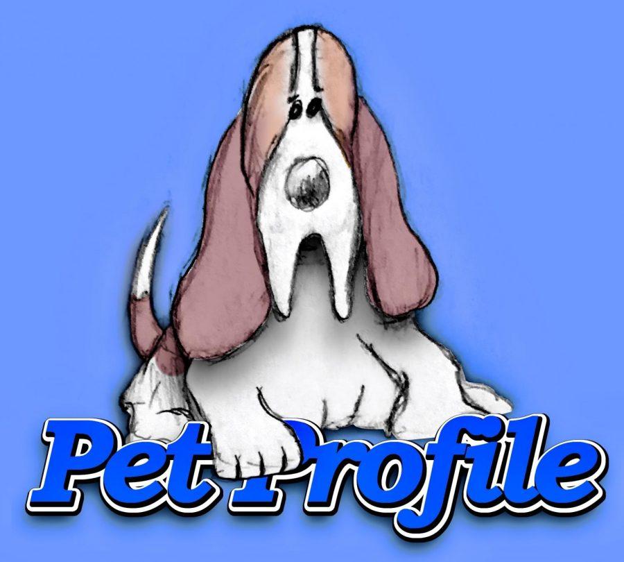 pet profile