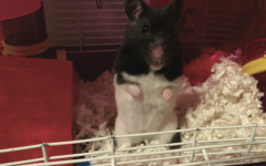 Pet Profile: Miss Hammy